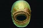 Κίνα: Ανακαλύφθηκε ο αρχαιότερος γνωστός πρόγονος του ανθρώπου;( terranovaincognita.gr)